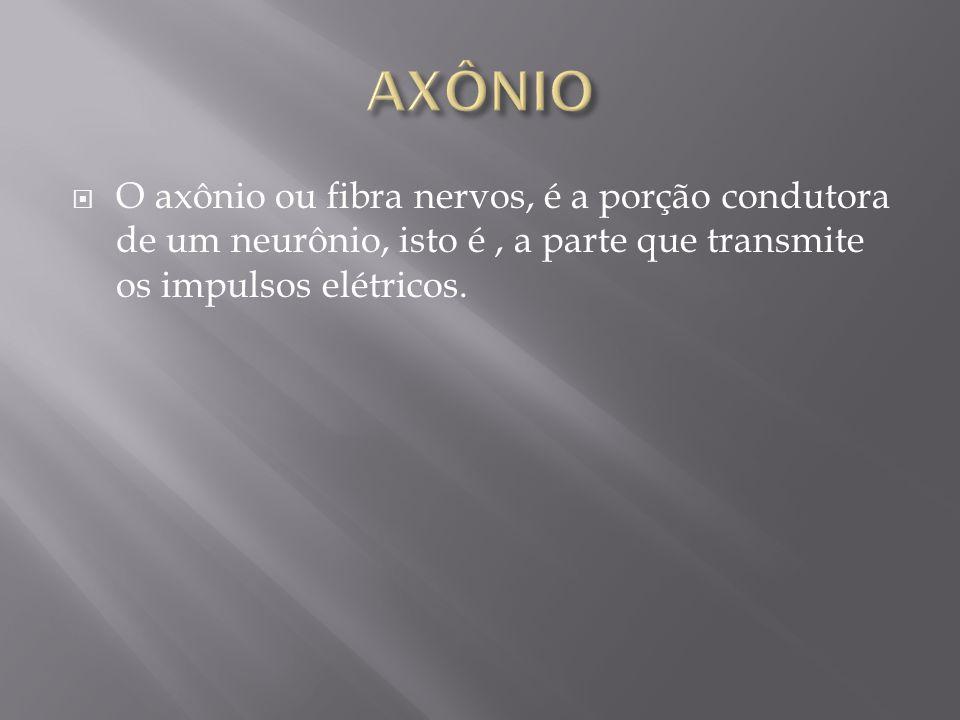 AXÔNIO O axônio ou fibra nervos, é a porção condutora de um neurônio, isto é , a parte que transmite os impulsos elétricos.