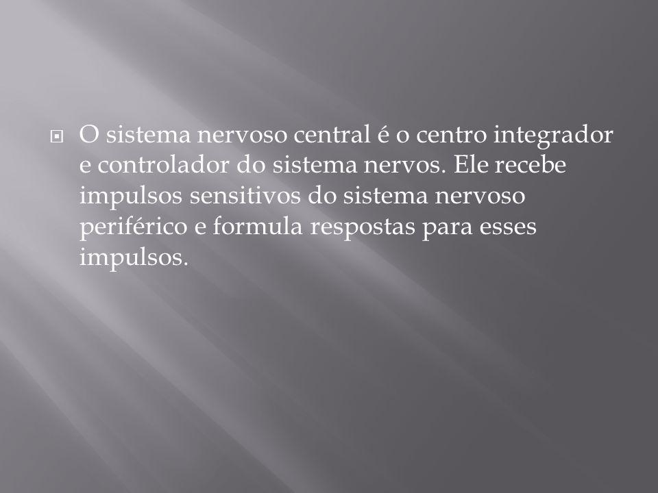 O sistema nervoso central é o centro integrador e controlador do sistema nervos.