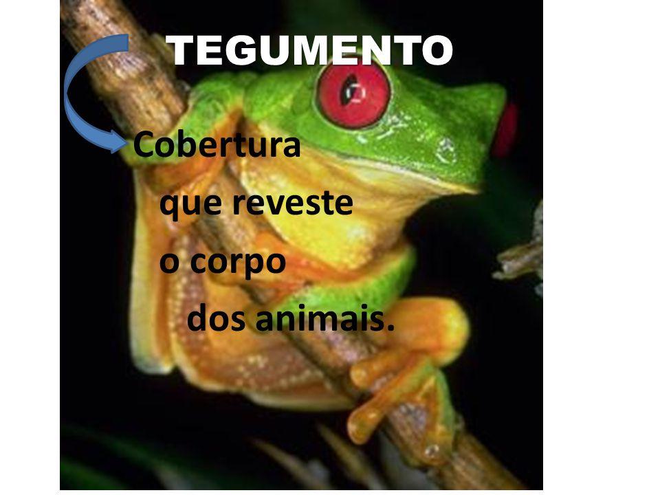 TEGUMENTO Cobertura que reveste o corpo dos animais.