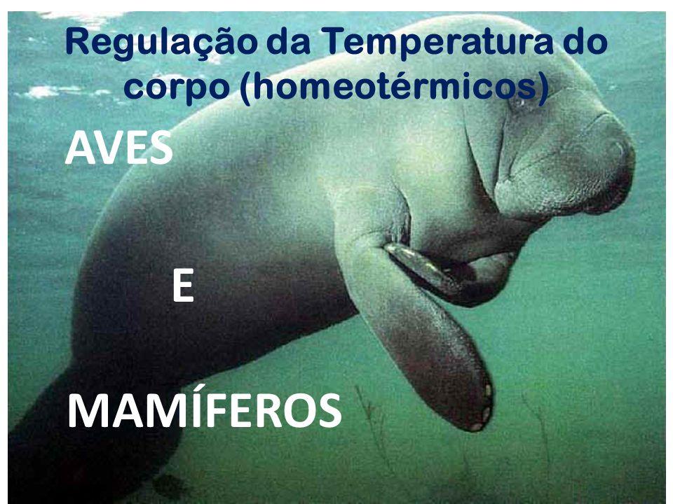 Regulação da Temperatura do corpo (homeotérmicos)