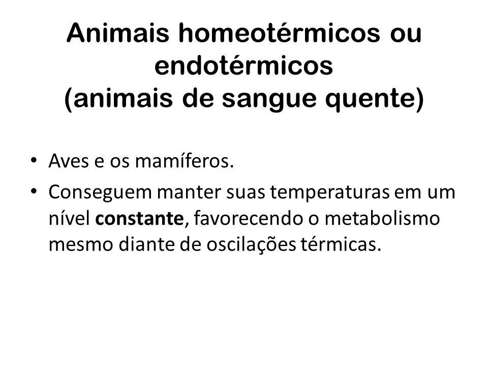 Animais homeotérmicos ou endotérmicos (animais de sangue quente)