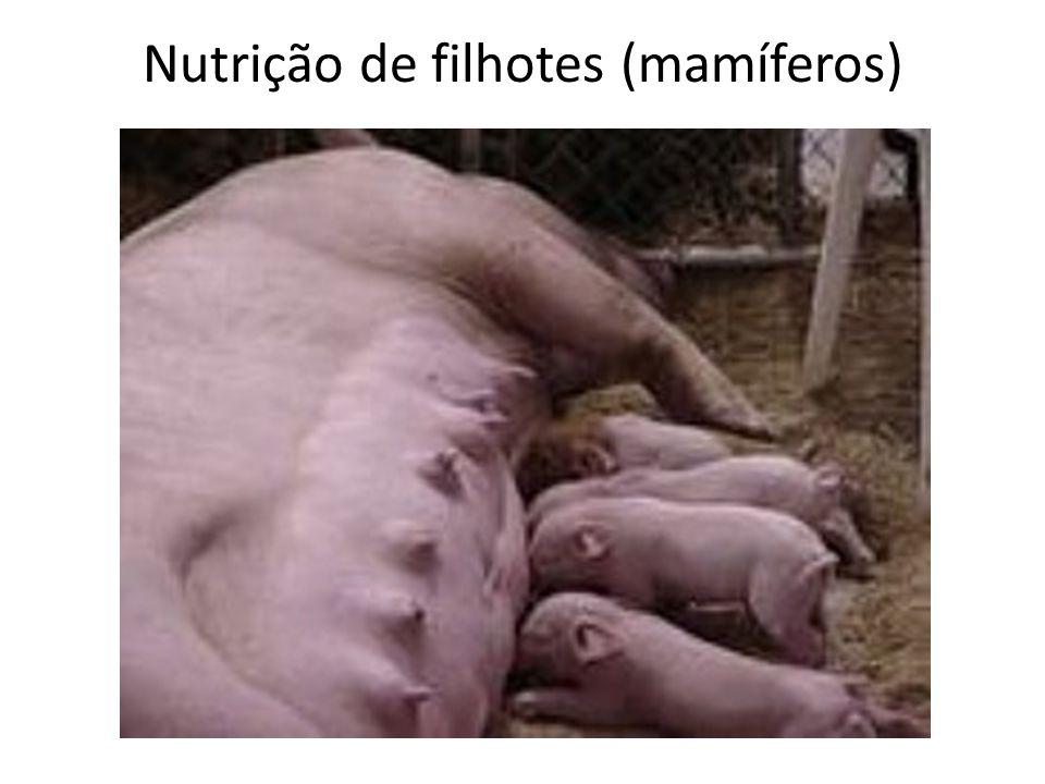 Nutrição de filhotes (mamíferos)