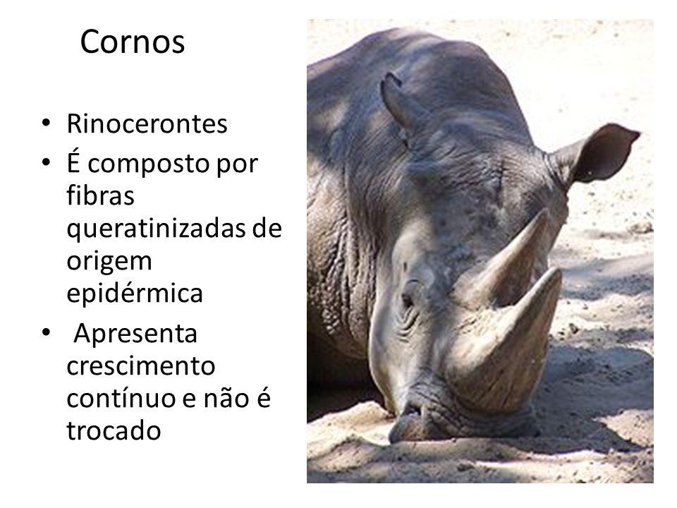 Cornos Rinocerontes. É composto por fibras queratinizadas de origem epidérmica.