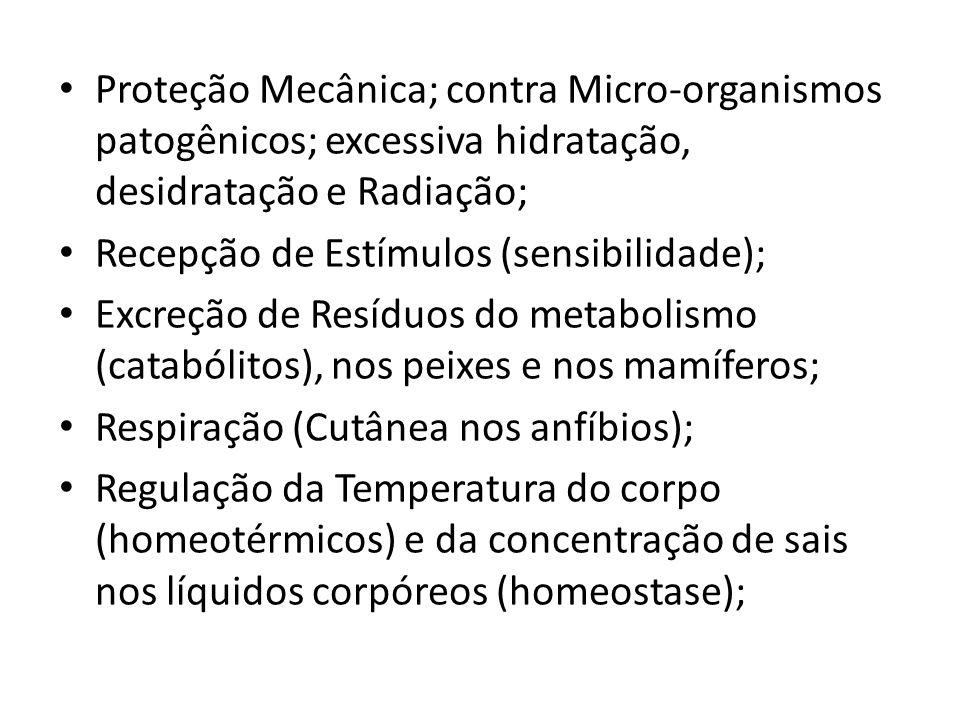 Proteção Mecânica; contra Micro-organismos patogênicos; excessiva hidratação, desidratação e Radiação;