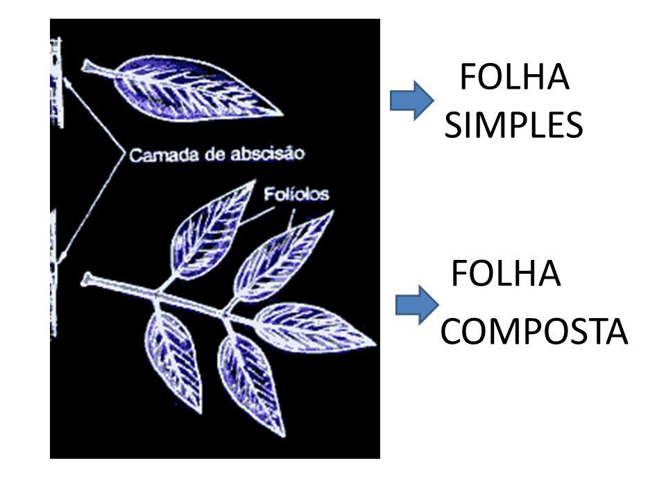 FOLHA SIMPLES FOLHA COMPOSTA