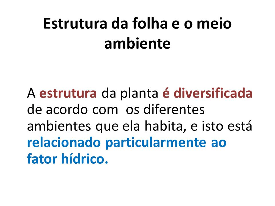 Estrutura da folha e o meio ambiente