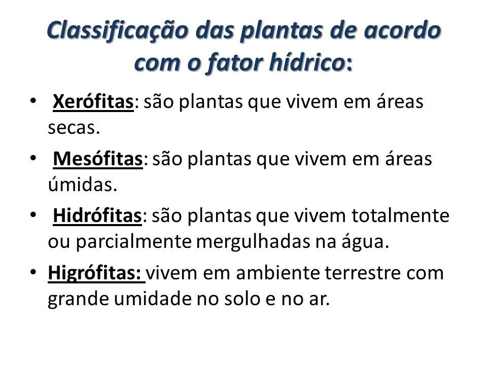 Classificação das plantas de acordo com o fator hídrico: