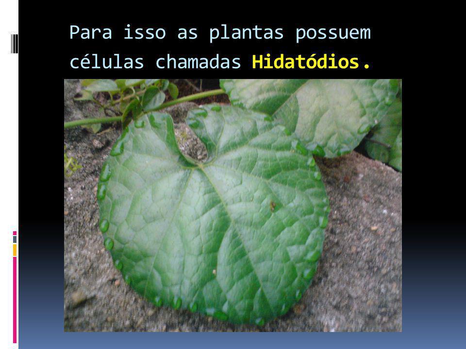 Para isso as plantas possuem células chamadas Hidatódios.