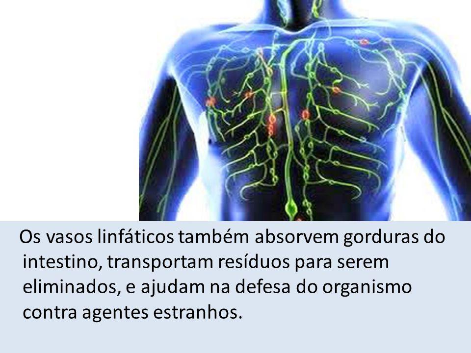 Os vasos linfáticos também absorvem gorduras do intestino, transportam resíduos para serem eliminados, e ajudam na defesa do organismo contra agentes estranhos.