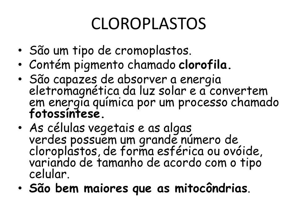 CLOROPLASTOS São um tipo de cromoplastos.