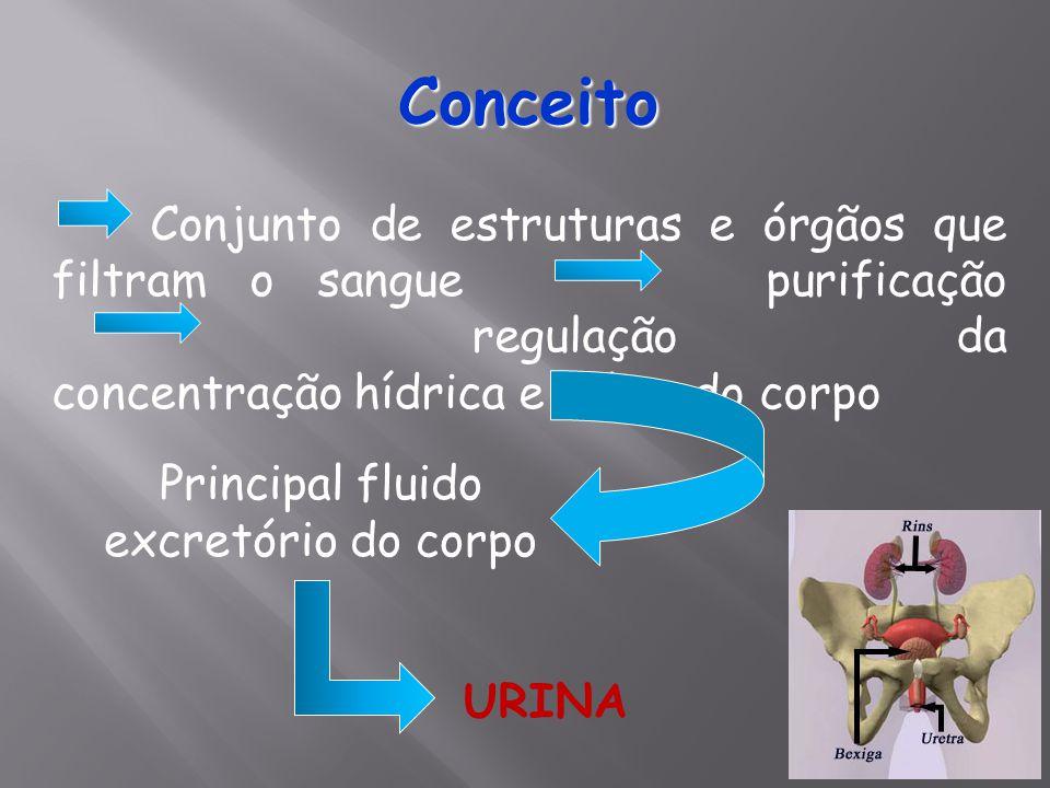 Principal fluido excretório do corpo
