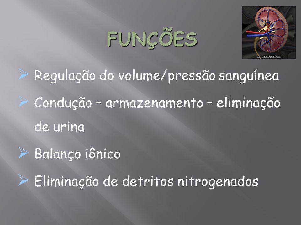 FUNÇÕES Regulação do volume/pressão sanguínea
