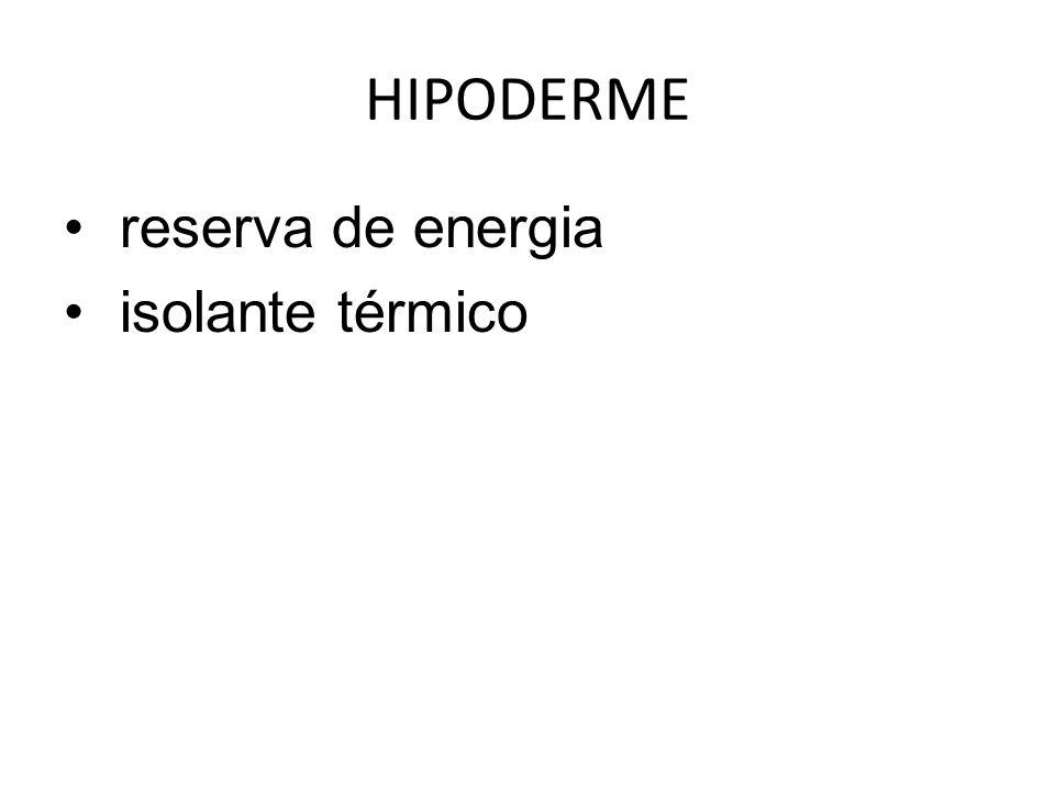 HIPODERME reserva de energia isolante térmico