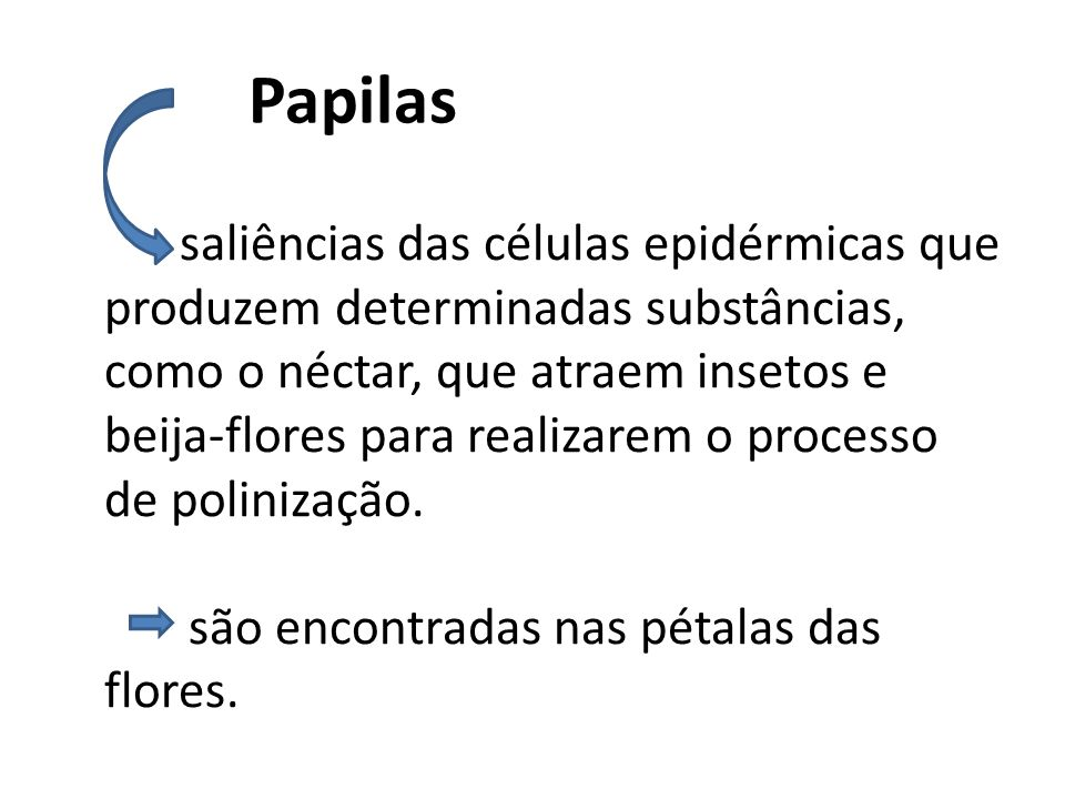 Papilas
