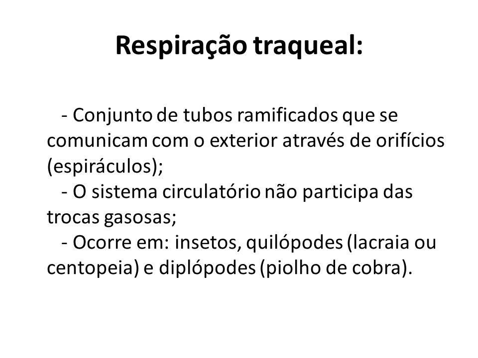 Respiração traqueal: