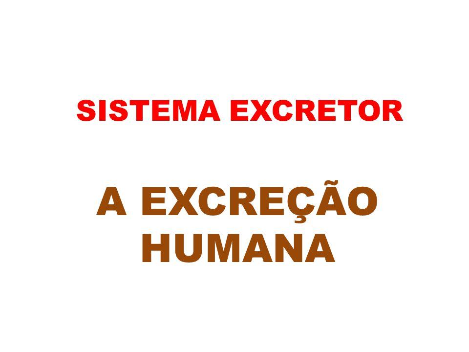 SISTEMA EXCRETOR A EXCREÇÃO HUMANA