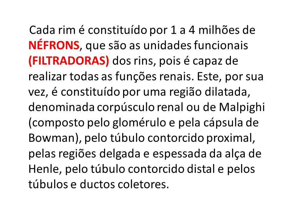 Cada rim é constituído por 1 a 4 milhões de NÉFRONS, que são as unidades funcionais (FILTRADORAS) dos rins, pois é capaz de realizar todas as funções renais.
