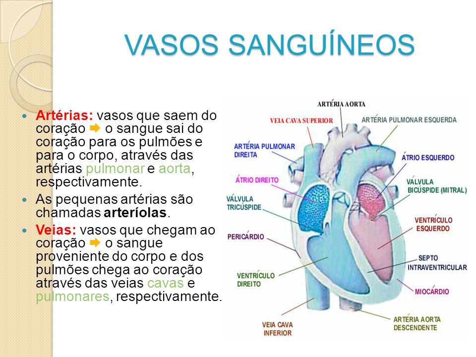 VASOS SANGUÍNEOS
