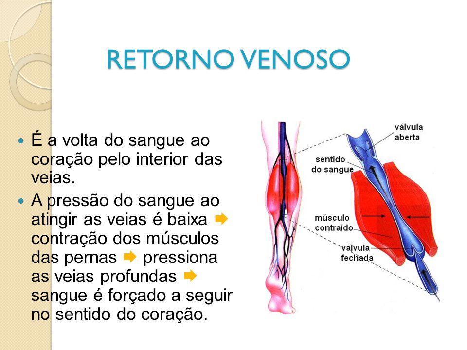 RETORNO VENOSO É a volta do sangue ao coração pelo interior das veias.