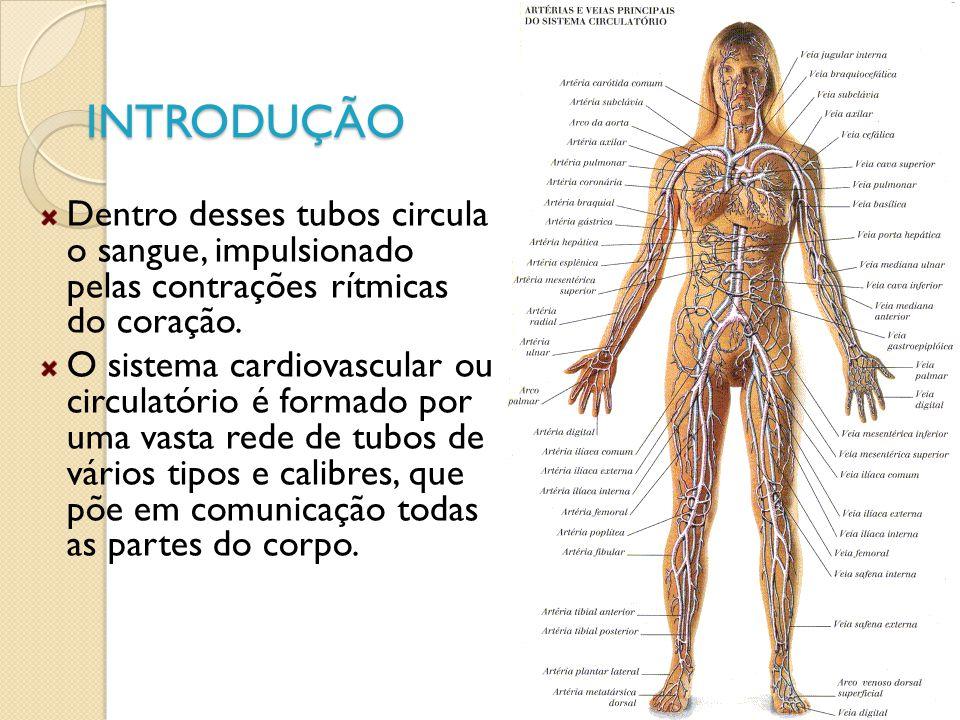 INTRODUÇÃO Dentro desses tubos circula o sangue, impulsionado pelas contrações rítmicas do coração.