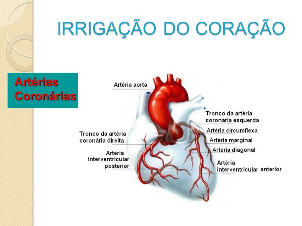 IRRIGAÇÃO DO CORAÇÃO Artérias Coronárias