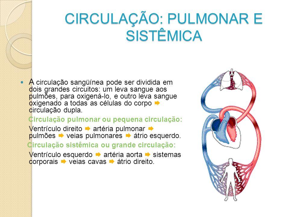 CIRCULAÇÃO: PULMONAR E SISTÊMICA