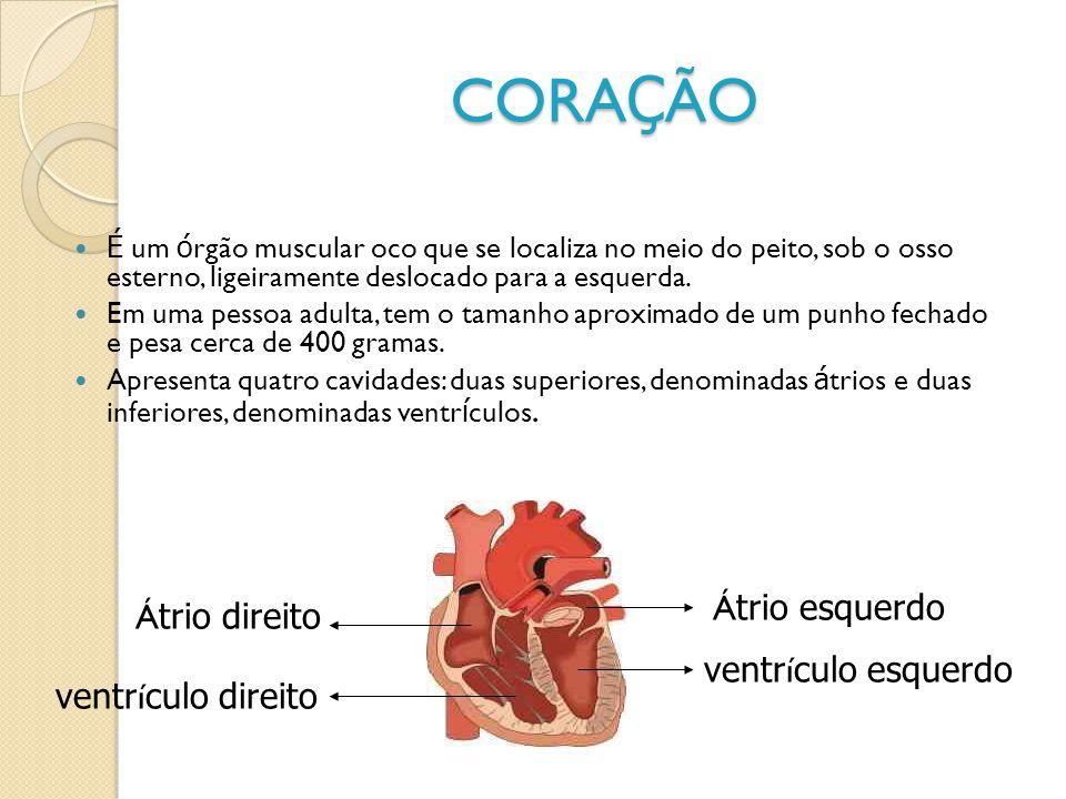 CORAÇÃO Átrio esquerdo Átrio direito ventrículo esquerdo