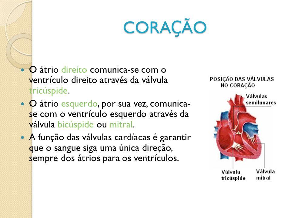 CORAÇÃO O átrio direito comunica-se com o ventrículo direito através da válvula tricúspide.
