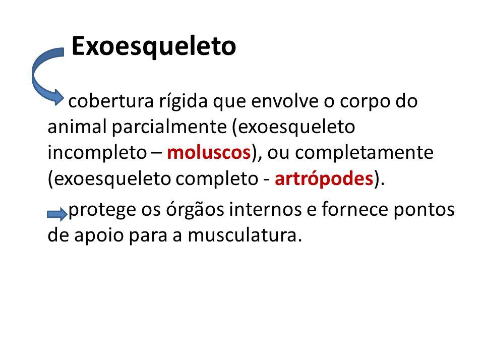 Exoesqueleto