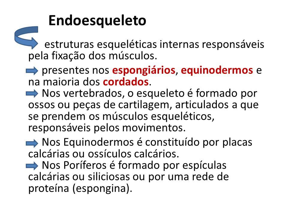 Endoesqueleto