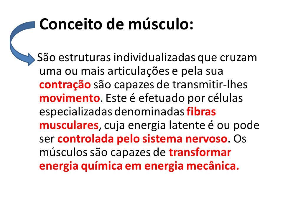 Conceito de músculo: