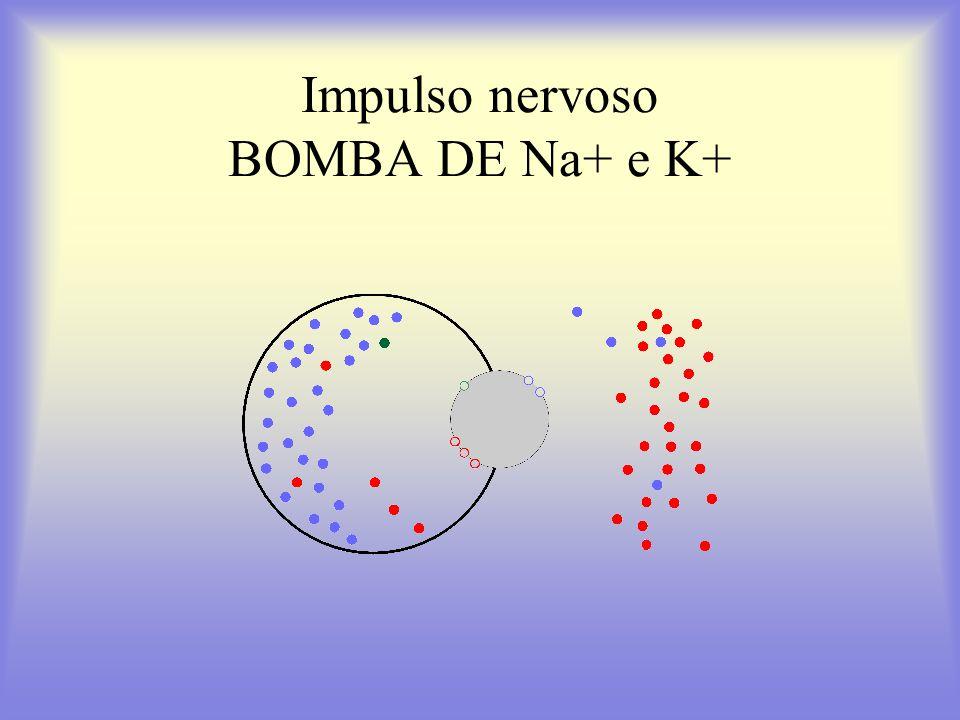 Impulso nervoso BOMBA DE Na+ e K+