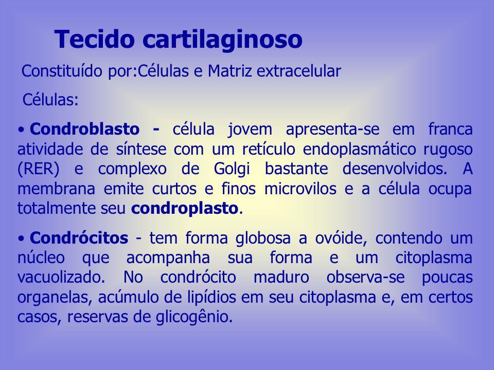 Tecido cartilaginoso Constituído por:Células e Matriz extracelular