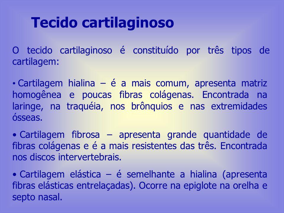 Tecido cartilaginoso O tecido cartilaginoso é constituído por três tipos de cartilagem: