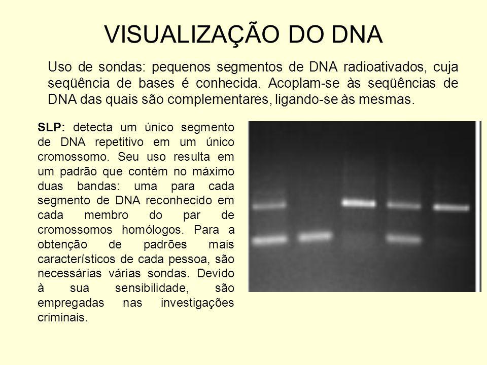 VISUALIZAÇÃO DO DNA