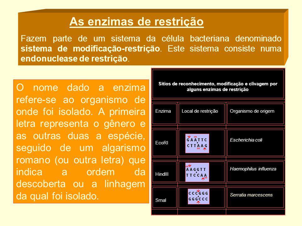 As enzimas de restrição