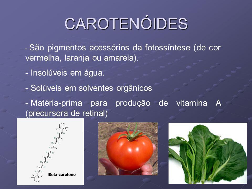 CAROTENÓIDES Insolúveis em água. Solúveis em solventes orgânicos