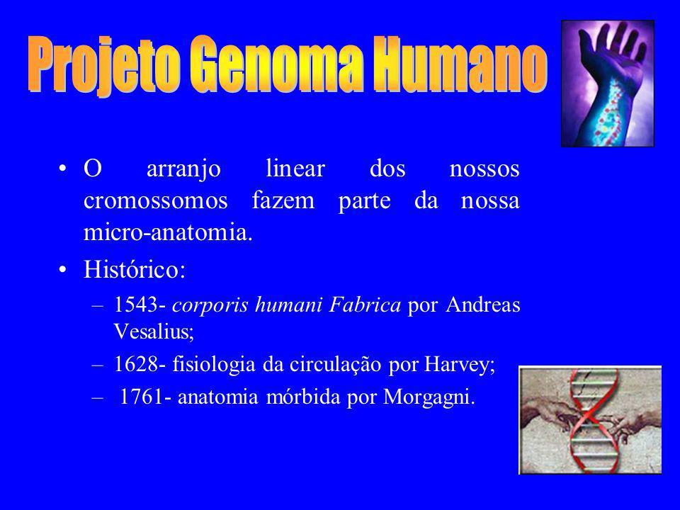 Projeto Genoma Humano O arranjo linear dos nossos cromossomos fazem parte da nossa micro-anatomia. Histórico: