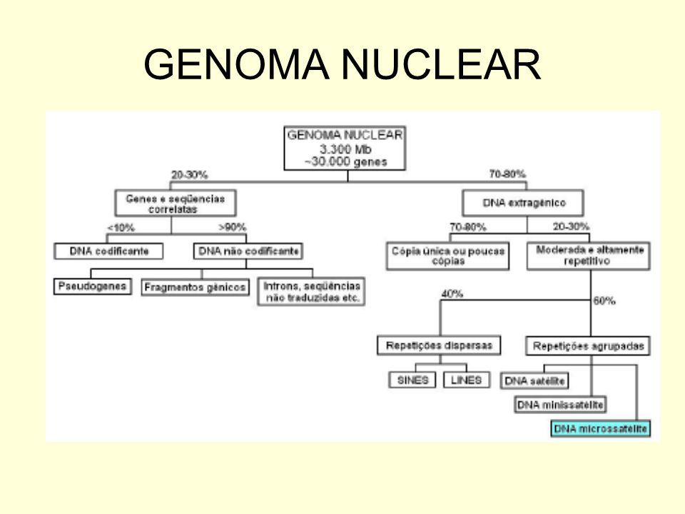 GENOMA NUCLEAR