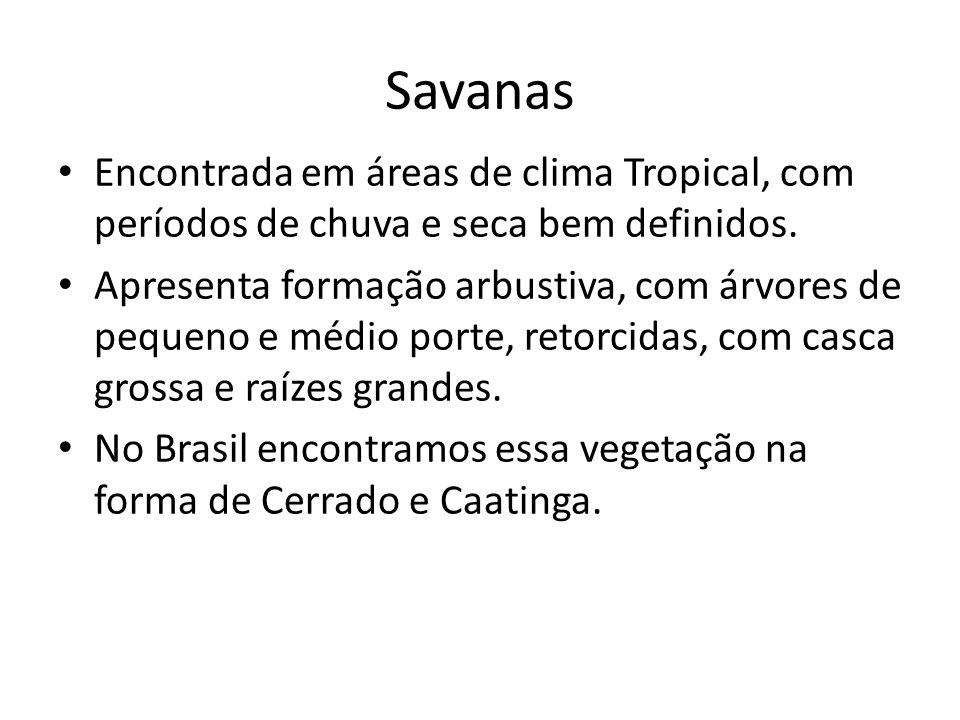 Savanas Encontrada em áreas de clima Tropical, com períodos de chuva e seca bem definidos.