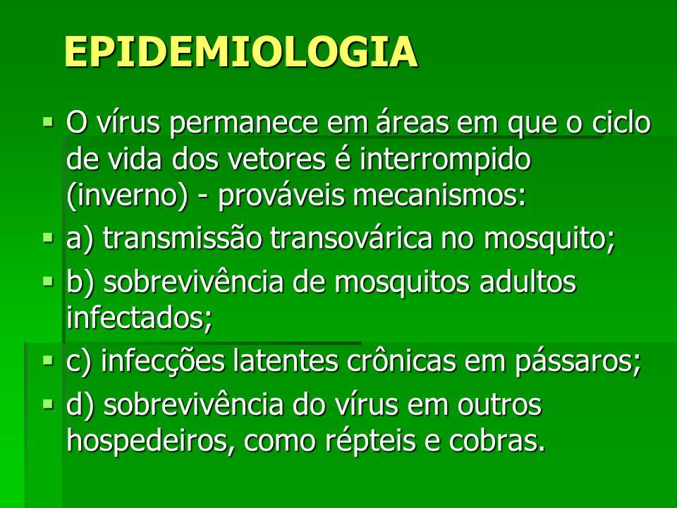 EPIDEMIOLOGIA O vírus permanece em áreas em que o ciclo de vida dos vetores é interrompido (inverno) - prováveis mecanismos: