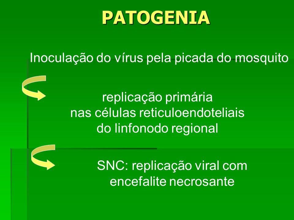 PATOGENIA Inoculação do vírus pela picada do mosquito