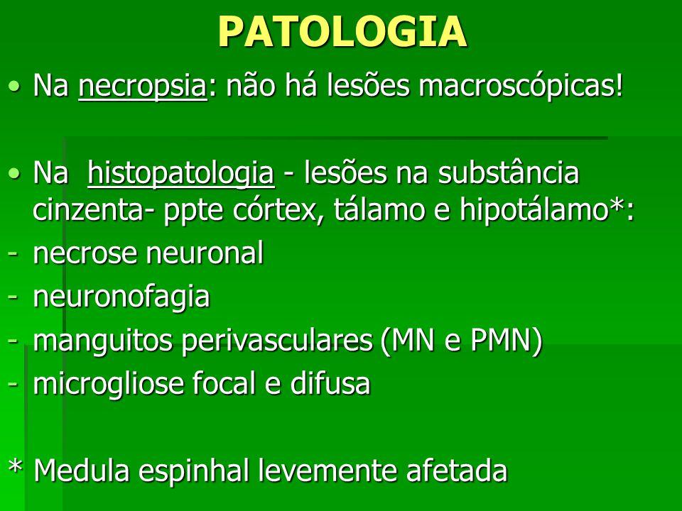 PATOLOGIA Na necropsia: não há lesões macroscópicas!