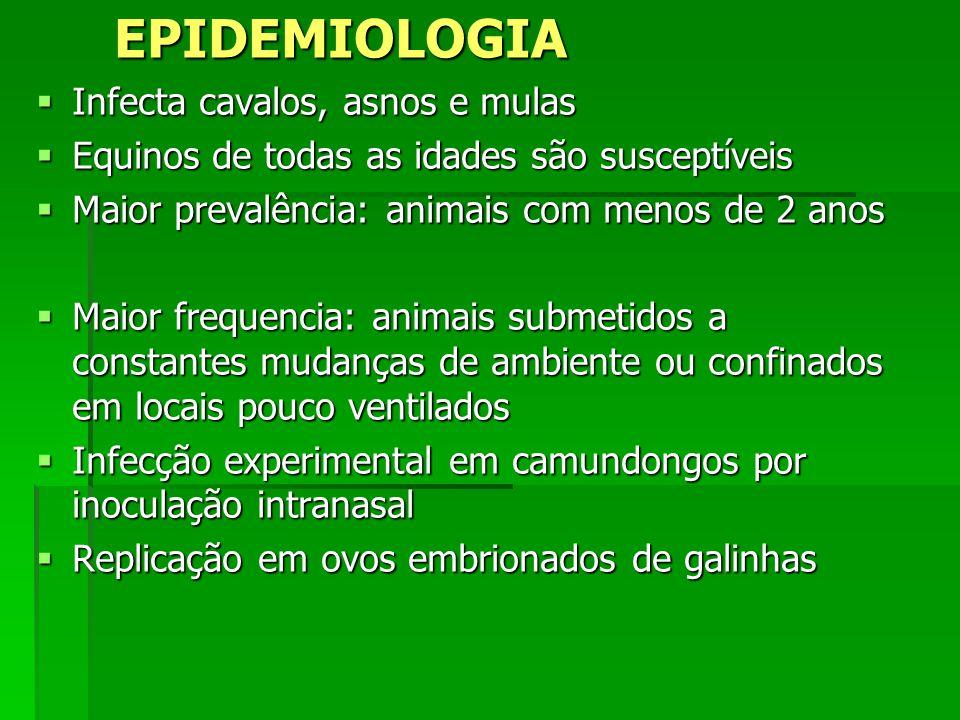 EPIDEMIOLOGIA Infecta cavalos, asnos e mulas