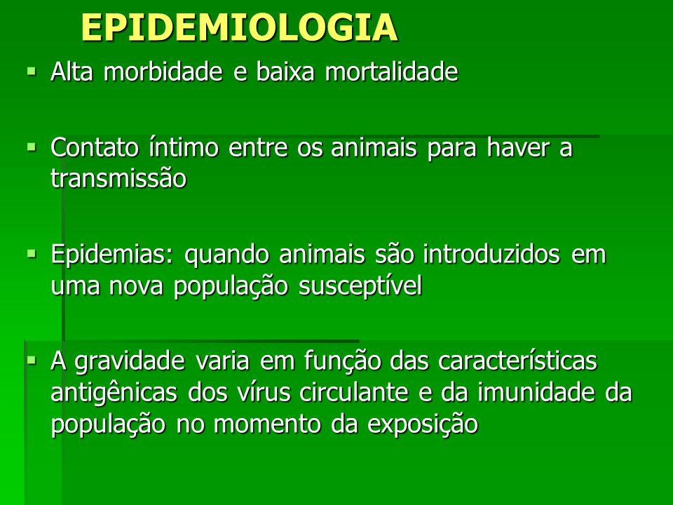 EPIDEMIOLOGIA Alta morbidade e baixa mortalidade