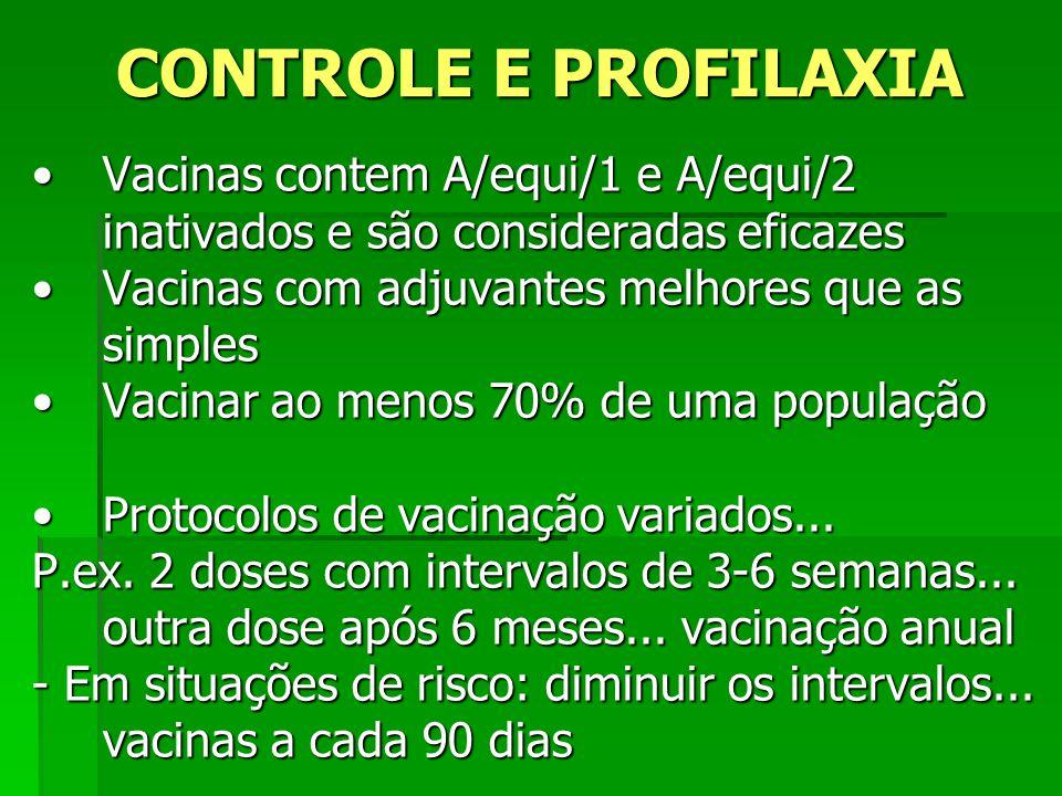 CONTROLE E PROFILAXIA Vacinas contem A/equi/1 e A/equi/2 inativados e são consideradas eficazes. Vacinas com adjuvantes melhores que as simples.