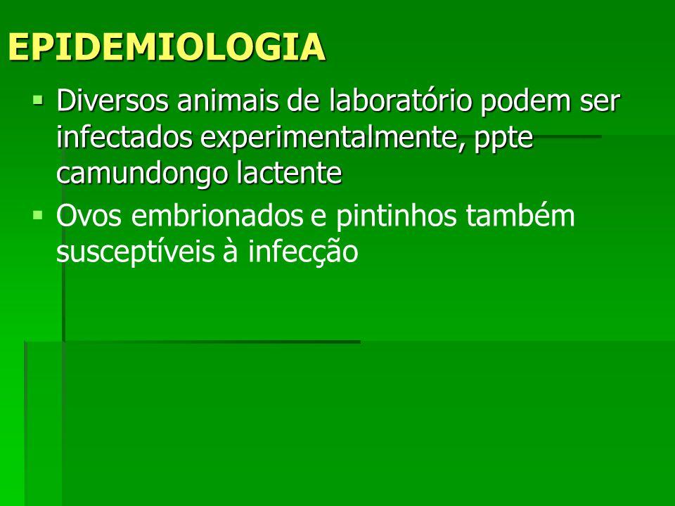 EPIDEMIOLOGIA Diversos animais de laboratório podem ser infectados experimentalmente, ppte camundongo lactente.