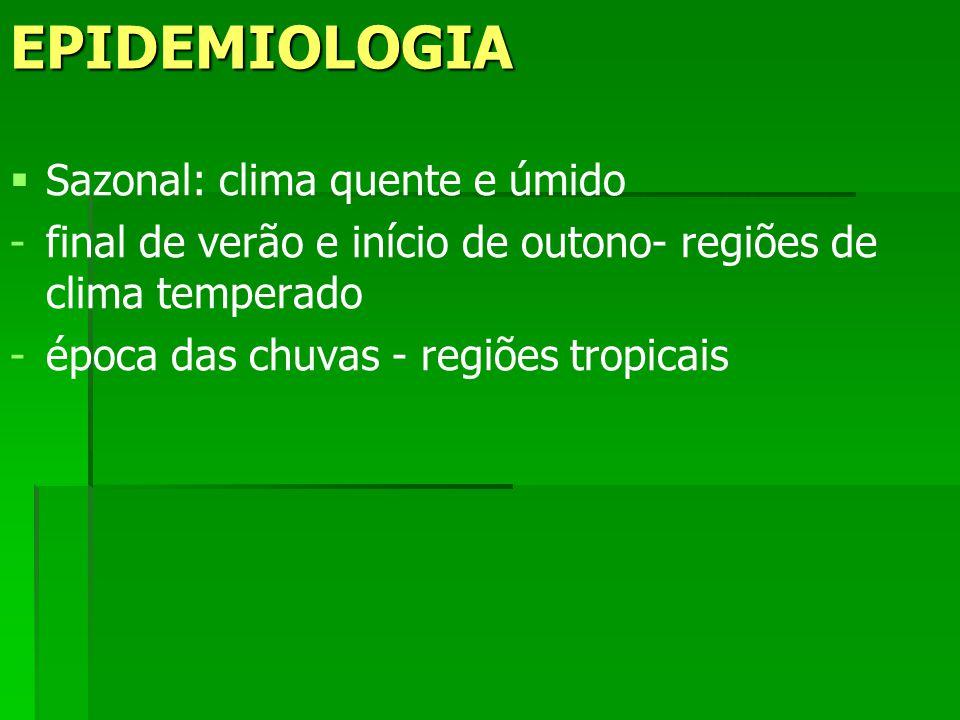 EPIDEMIOLOGIA Sazonal: clima quente e úmido