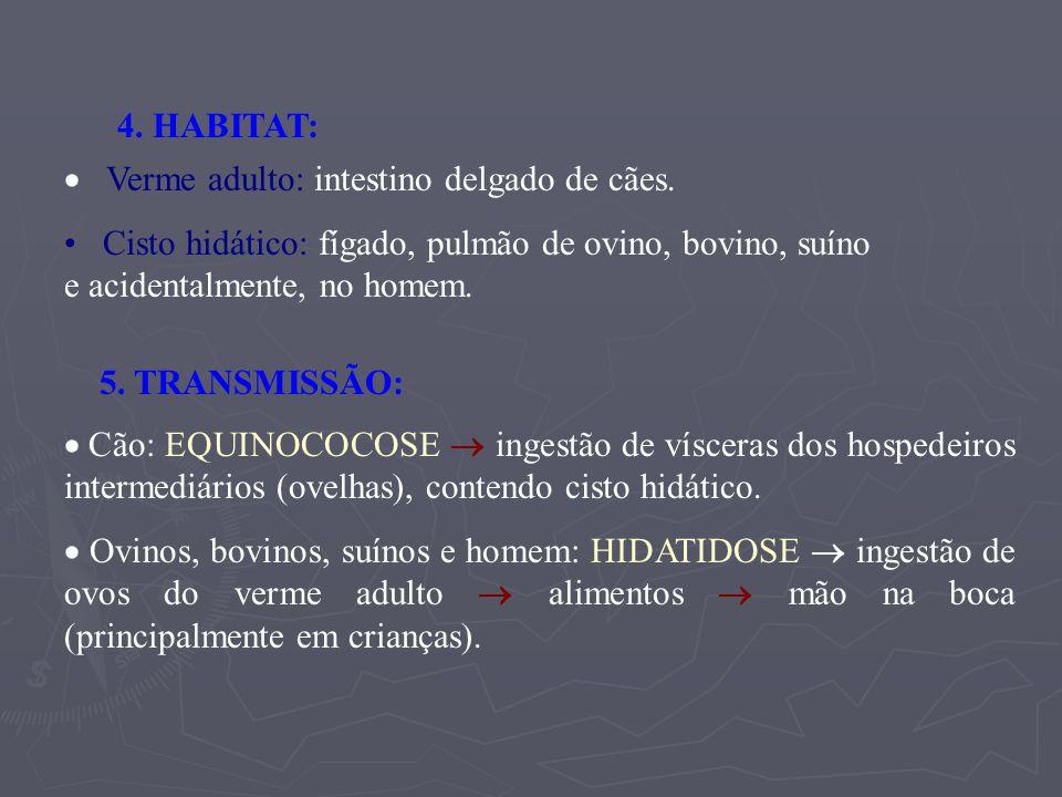 4. HABITAT: · Verme adulto: intestino delgado de cães. Cisto hidático: fígado, pulmão de ovino, bovino, suíno e acidentalmente, no homem.