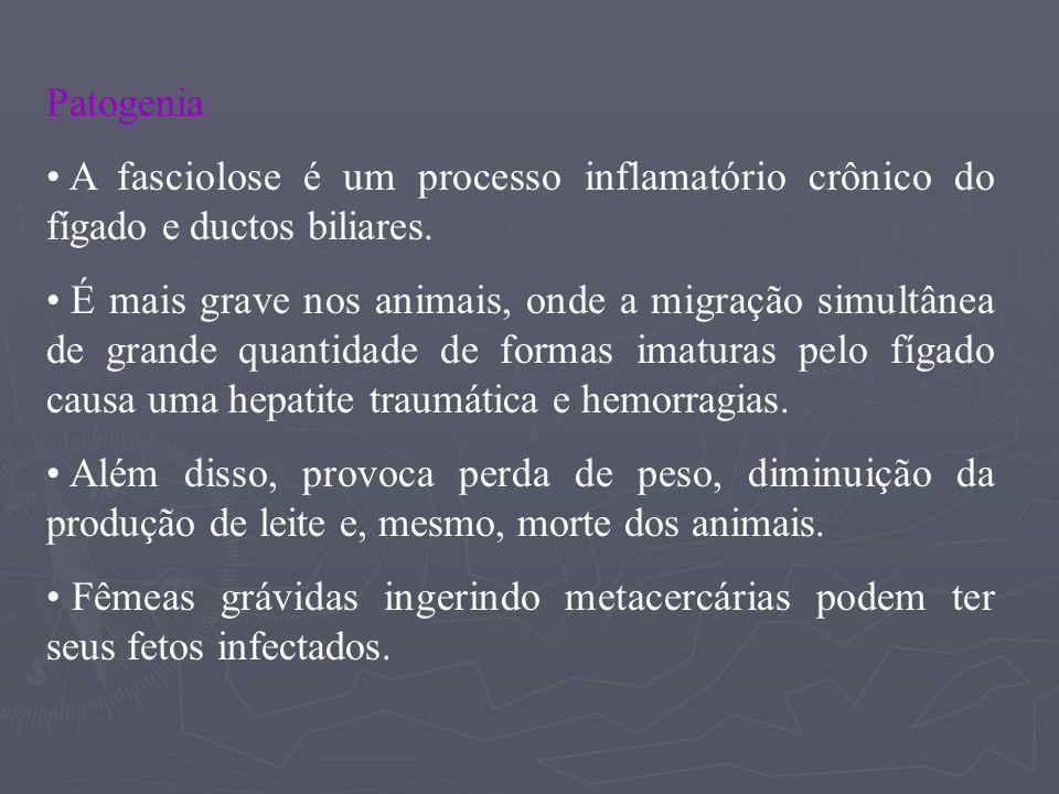 Patogenia A fasciolose é um processo inflamatório crônico do fígado e ductos biliares.